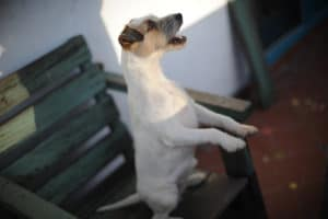 Well_Hunde_005